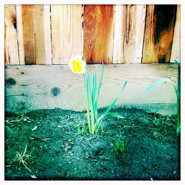 Photo Friday: A Bit of Beauty in a Patch ofDirt